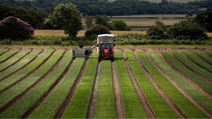 El futuro de la agricultura: una batalla por el Brexit por el panorama británico