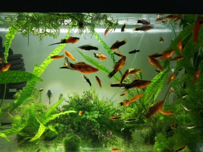 Crea un acuario plantado increíble con esta guía detallada